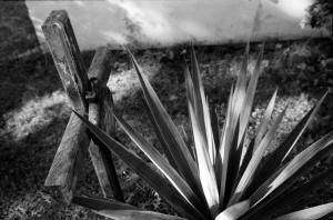 Tumba y cactus